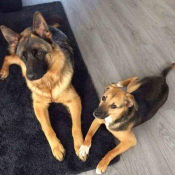Rufi (rechts) 'pootje in pootje' met zijn nieuw kamaraadje Gaya