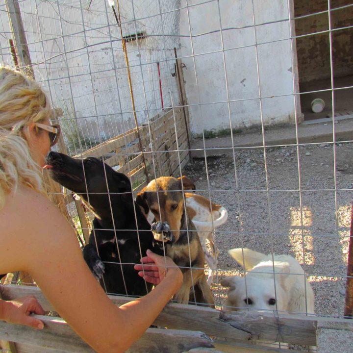Griekse honden op zoek naar een baasje.